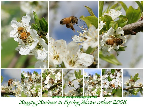 buzzing business 2008