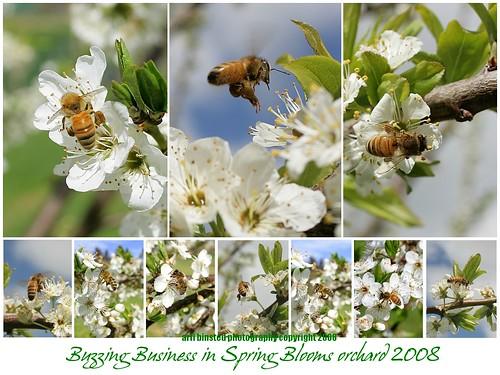 buzzing business 2008