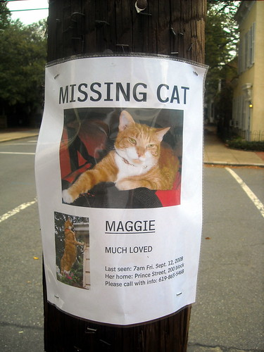 A missing pet poster of a cat nailed to a tree.