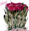 Roses-Poster-1-with-text