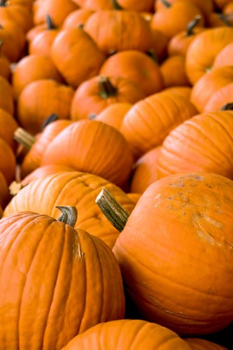 Guess What's Coming - Halloween pumpkins in Stayton Oregon