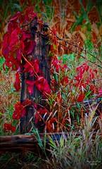 Fencepost (ShaadowFox/..making a comeback???) Tags: red canada color colour fall rural nikon fencepost d40 dragondaggerphoto