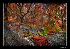 Autumn colours (Mariusz Petelicki) Tags: autumn poland polska hdr jesień canonefs1022mm 3xp canon400d mariuszpetelicki