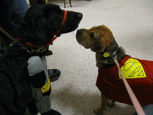 Batman and SuperPup
