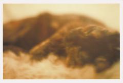 Sascha sleeps sometimes (Kira Sheker) Tags: color film 35mm kitten soft tortoiseshell pillow labyrinthine thelittledoglaughed asahisv kirasheker