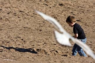Seagull & Boy_0533.jpg