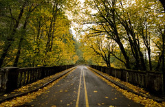 IMG_5467 (sweber4507) Tags: bridge autumn trees fall leaves river leaf highway scenic columbia historic gorge thisiswhyilovephotography thefeelofphotography