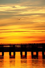 Air, Rail or Sea? (undersiege) Tags: bridge sunset clouds river flying waves seagull railway tay firth