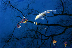 Dream of fish #2 (yein~) Tags: blue autumn fish tree water digital canon bravo dream korea 50faves