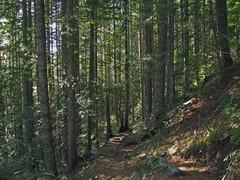 Wooded trail scene