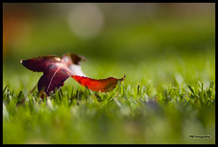 Alone (Filipe Batista) Tags: flowers autumn light flores luz leaves canon dof 85mm outono 40d