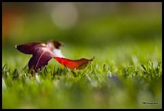 Alone (Filipe Batista) Tags: flowers autumn light flores luz leaves canon dof 85mm outono 40d