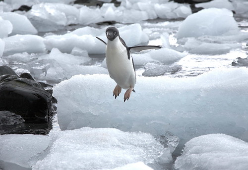 hoverpenguin