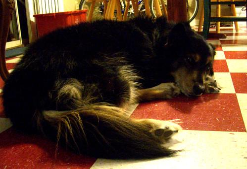 Sabrina's Dog TeAmo
