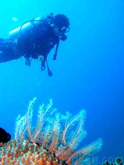 Phuket 2008 (Dasmond) Tags: world holiday underwater diving resort phuket  budda   dasmondkoh gilldivers    brojj