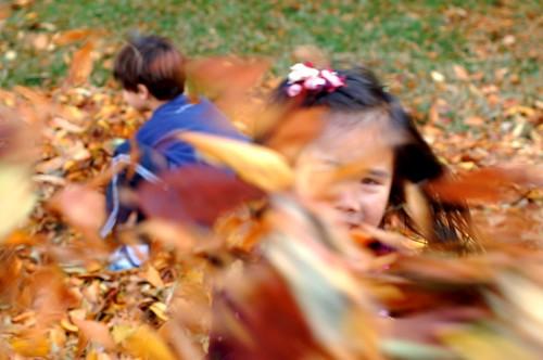 Leaf Fun 11-08 (251)
