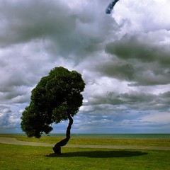 Wind-shaped tree (josef.stuefer) Tags: sea newzealand tree nature clouds explore napier josefstuefer