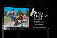Black Stallion Sign. (Blackstallionhills.com) Tags: travel horse woman costa black girl sign real for model estate sale rica hills land tours lots stallion trave