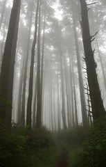 (jpaulus) Tags: fog woods d70 path pointreyes