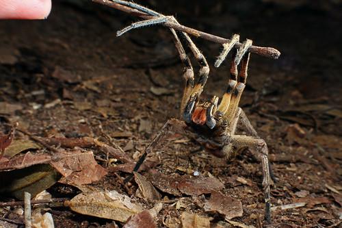 Las Arañas Mas Grandes
