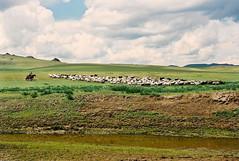 On the steppes, Mongolia (benjetpascal01) Tags: shepherd herd steppes steppe berger troupeau  mongoluls mongoliamongolie