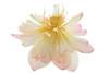 Lotus Flower - IMG_487-1000 (Bahman Farzad) Tags: flower macro yoga peace lotus relaxing peaceful meditation therapy lotusflower lotuspetal lotuspetals lotusflowerpetals lotusflowerpetal