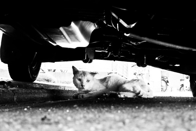 Today's Cat@2011-06-26