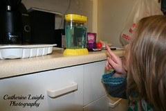 Sea Monkeys (Catherine Laight) Tags: pets seamonkeys photoaday canon350d deacon 2014 catherinelaightphotography