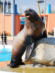 Making a Fuss (Caveni) Tags: dolphin orca sealion antibes marineland orque marinelandantibes