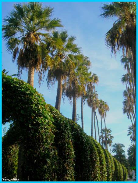 Parque Hern+índez ma+¦ana 5