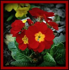 Red flower at cearsney abbey (bonksie61) Tags: red flower abbey breathtaking smörgåsbord digitalcameraclub avision almostanything cearsney