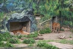 新竹市立動物園21