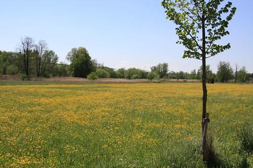 2008-05-11_05