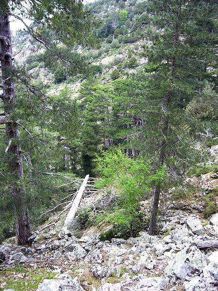 Dans le ravin de Calanconi au niveau de l'arbre mort