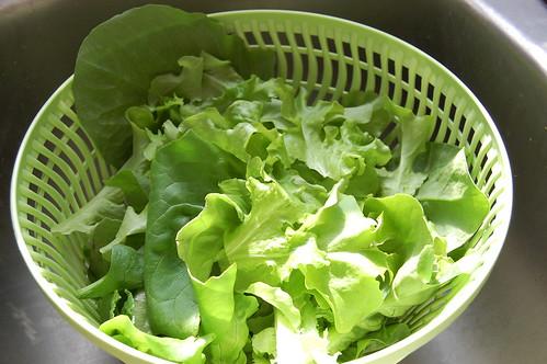 Salad Harvest 053108-03