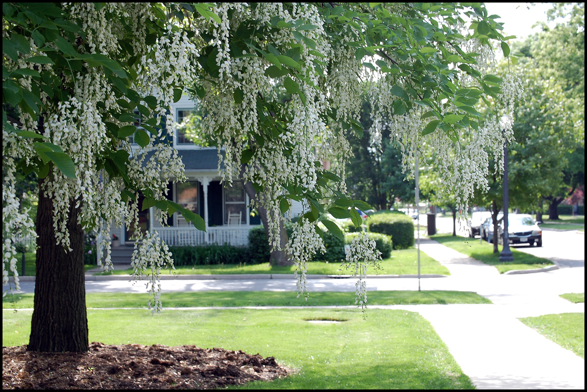 Final Front Garden Design - Planting Trees | Holyoke Home