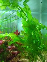 Thủy Sinh Tuấn Anh-Chuyên cây & Rêu Thủy Sinh, Cá Cảnh Biền & Hồ Cá Cảnh Biển - 22