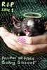 goodbye little one (-ViDa-) Tags: cat dead kitten chat kittie