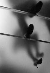 Sydney Apple Store Opening (jose cisneros) Tags: apple glass stairs computer macintosh store mac shoes steps sydney silhouettes australia applestore zapatos heels newsouthwales tacones siluetas escaleras escalones applestoreopening glassstaircase sydneyapplestore escaleradevidrio