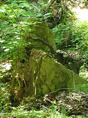 rock and vines (cdq3) Tags: outdoors photo tennessee streams brooks creeks natuer photonow