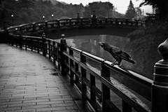 (nyan_da45) Tags: bridge blackandwhite japan  5d crow nikko