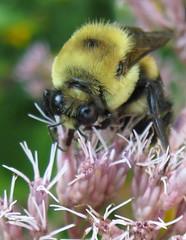 i bee hungry