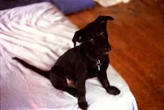 Ella as a puppy