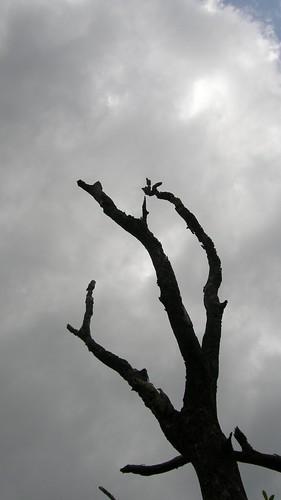 62.枯枝與白雲