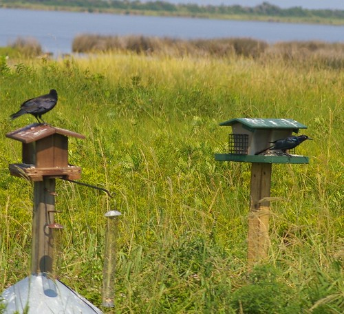 crow bird house wildlife refuge