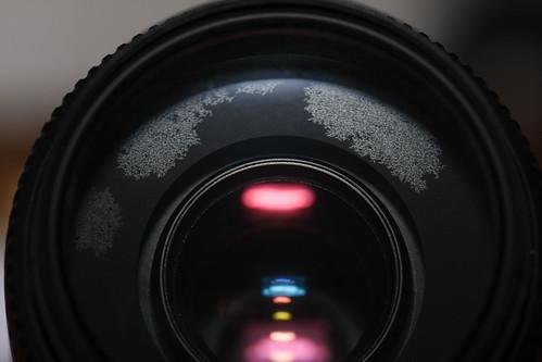 Contoh fungus pada lensa