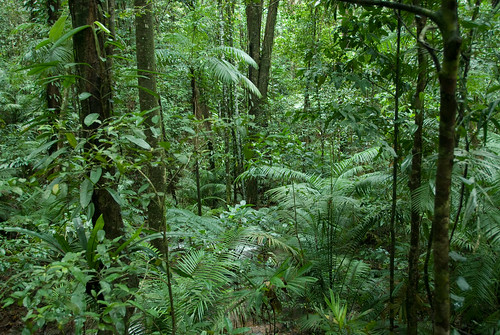 Rainforest Floor