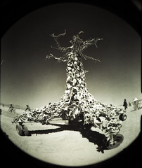 Bone Tree (Ivyerimenta) Tags: city party man black festival rock lomo desert nevada playa fisheye burningman blackrockcity burning event brc bm northern bonetree burningman2008