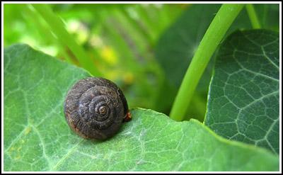 snail copy