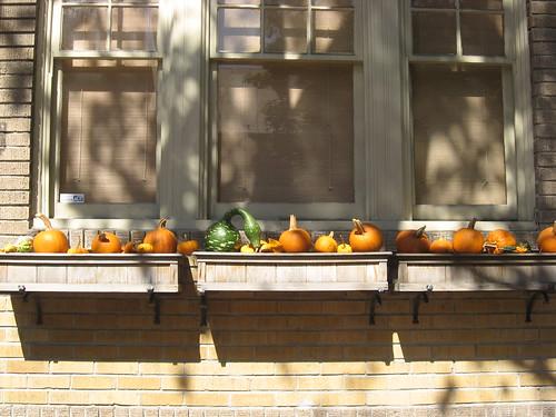 Autumn Gourds, Philadelphia Housefront